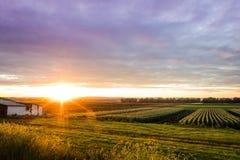 Bello tramonto sopra l'azienda agricola umile durante il raccolto di punta, fine dell'estate Immagini Stock