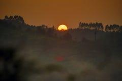 Bello tramonto sulla foresta Fotografia Stock Libera da Diritti