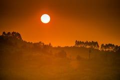 Bello tramonto sulla foresta Immagine Stock Libera da Diritti