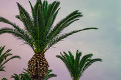 Bello tramonto tropicale con le palme alla spiaggia modificato Fotografia Stock Libera da Diritti