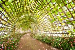 Bello tunnel dalla pianta nel parco della flora Fotografie Stock
