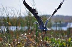 Bello uccello Fotografia Stock