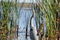 Bello uccello Fotografie Stock