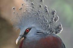 Bello uccello Fotografie Stock Libere da Diritti