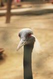 Bello uccello immagine stock