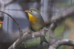 Bello uccello Immagini Stock Libere da Diritti