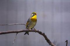 Bello uccello Immagini Stock