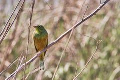 Bello uccello che si siede su un ramo Fotografie Stock