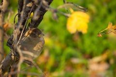 Bello uccello che si siede sul ramo Fotografia Stock