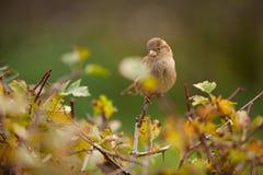 Bello uccello che si siede sul ramo Fotografia Stock Libera da Diritti