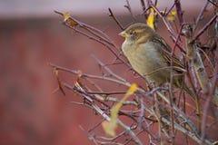 Bello uccello che si siede sul ramo Immagini Stock
