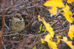 Bello uccello che si siede sul ramo Immagine Stock Libera da Diritti
