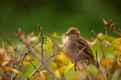 Bello uccello che si siede sul ramo Fotografie Stock Libere da Diritti