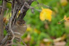 Bello uccello che si siede sul ramo Immagine Stock