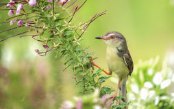 Bello uccello sull'albero Fotografie Stock Libere da Diritti