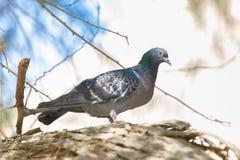 Bello uccello sulla cima dell'albero Fotografia Stock