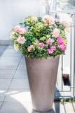 Bello vaso del patio con le disposizioni floreali: rose, petunie e fiori delle verbene sul balcone o sul terrazzo Piantatrice urb fotografia stock libera da diritti