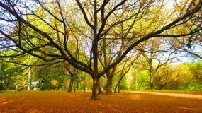 bello vecchio albero Fotografia Stock