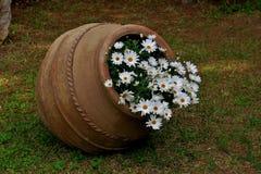 Bello vecchio vaso con le margherite bianche vicino su fotografia stock libera da diritti