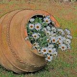 Bello vecchio vaso con le margherite bianche vicino su illustrazione vettoriale
