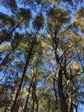 Bello verde degli alberi splendidi Fotografia Stock