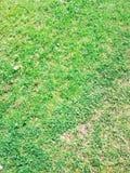 Bello, verde, insolito, necessario per tutta l'erba fotografia stock