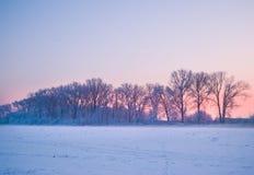Bello vicolo congelato degli alberi Immagini Stock