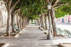 Bello vicolo degli alberi lungo la via Foro Vittorio Emanuele II sull'isola di Ortygia a Siracusa, Sicilia fotografie stock