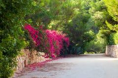 Bello vicolo di fioritura Fotografia Stock