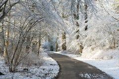 Vicolo di inverno che funziona fra gli alberi coperti di neve Immagine Stock