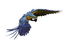 Bello volo dell'uccello nel fondo bianco immagini stock