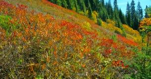 Bello Washington Autumn Nature Scenery - traccia gialla della collina dell'aster fotografia stock