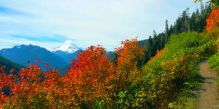 Bello Washington Autumn Nature Scenery - traccia gialla della collina dell'aster immagine stock