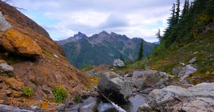 Bello Washington Autumn Nature Scenery - traccia gialla della collina dell'aster immagini stock