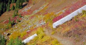 Bello Washington Autumn Nature Scenery - traccia gialla della collina dell'aster fotografia stock libera da diritti