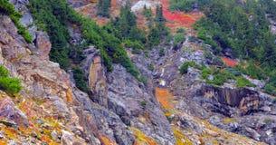 Bello Washington Autumn Nature Scenery - traccia gialla della collina dell'aster immagine stock libera da diritti