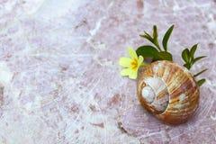 Bello zen-come la priorità bassa della natura Fotografie Stock