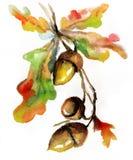 Bellota dibujada mano de la naturaleza del otoño de la acuarela ilustración del vector