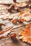 Bellotas con las hojas Imagen de archivo