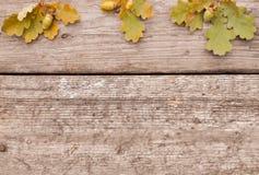 Bellotas con las hojas en fondo de madera en otoño flatley imagenes de archivo