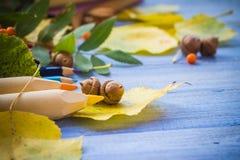 Bellotas de la escuela del otoño y escuela traseras Fotografía de archivo libre de regalías