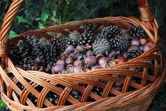 Bellotas y conos en la cesta de mimbre durante el otoño Imagenes de archivo