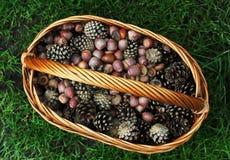 Bellotas y conos en la cesta de mimbre, otoño Imágenes de archivo libres de regalías