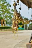 Bells hanging with wishes on the territory of the temple of the Big Buddha Royalty Free Stock Photos