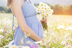 Belly of pregnant woman with daisy flowers Stock Photos