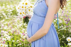 Belly of pregnant woman with daisy flowers Stock Image