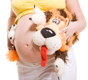 Belly pregnant woman with tiger toy Royalty Free Stock Image