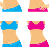 Belly and slim waist. Female body parts. Illustration Stock Images
