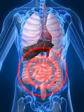 Bellyache. 3d rendered illustration of a human anatomy with bellyache Royalty Free Stock Photography