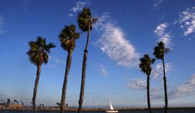 Belmont Peninsula Palms. Palm trees on Belmont Peninsula, Long Beach, CA Stock Photos